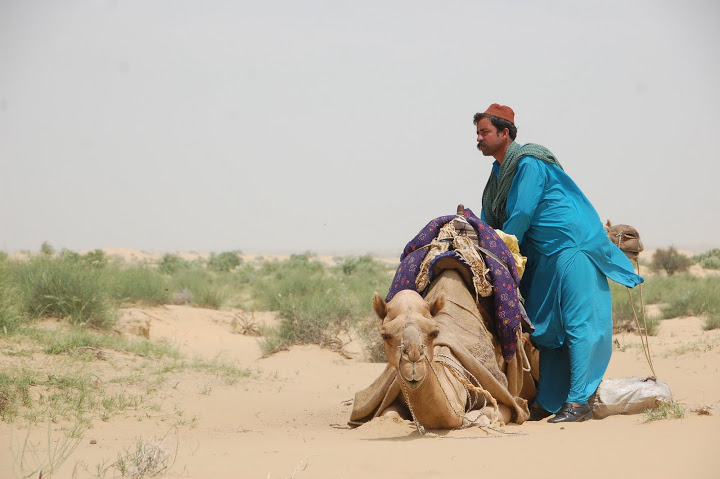 India - Jaisalmer - Kneeling Camel