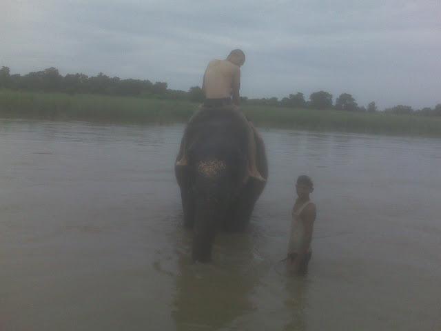 Nepal - Chitwan - Elephant Bath