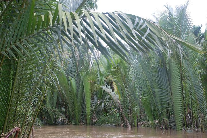 Vietnam - Mekong Delta - Canoeing