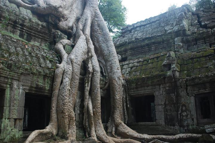 Cambodia - Angkor - Overgrown Tree