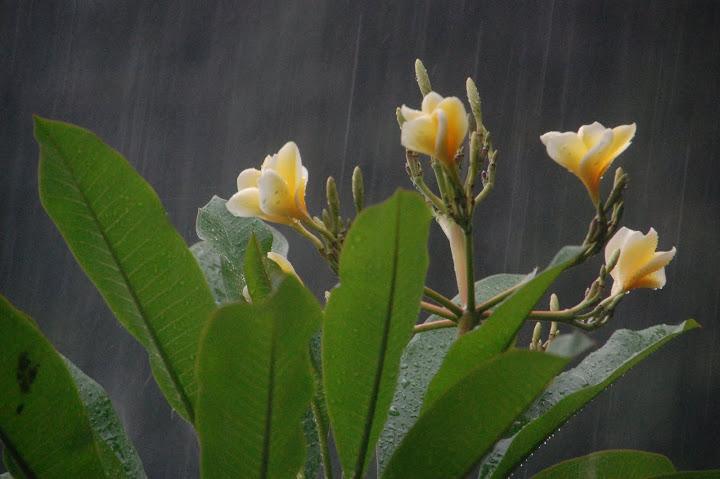 Indonesia - Bali - Kusamba - Flowers