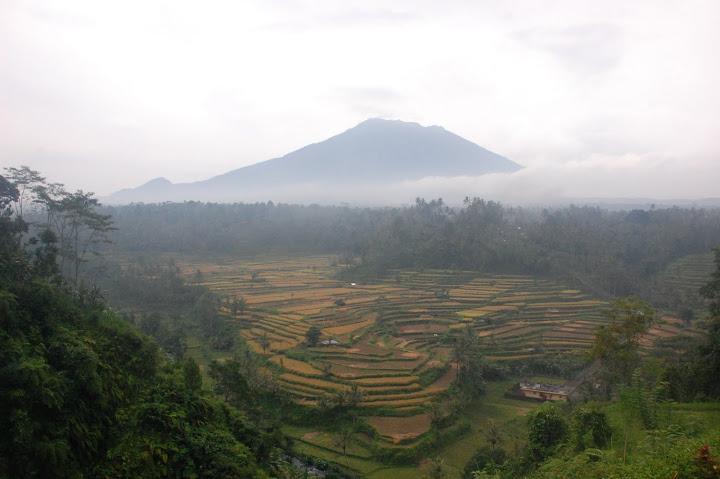 Indonesia - Bali - Ubud - Rice Paddies