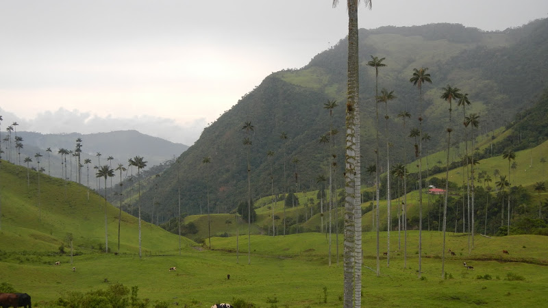 Colombia - Salento - Cocora Valley Palms