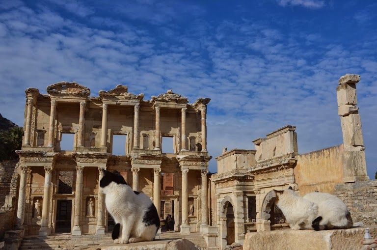 Even the cats are impressed with the Library of Celsus