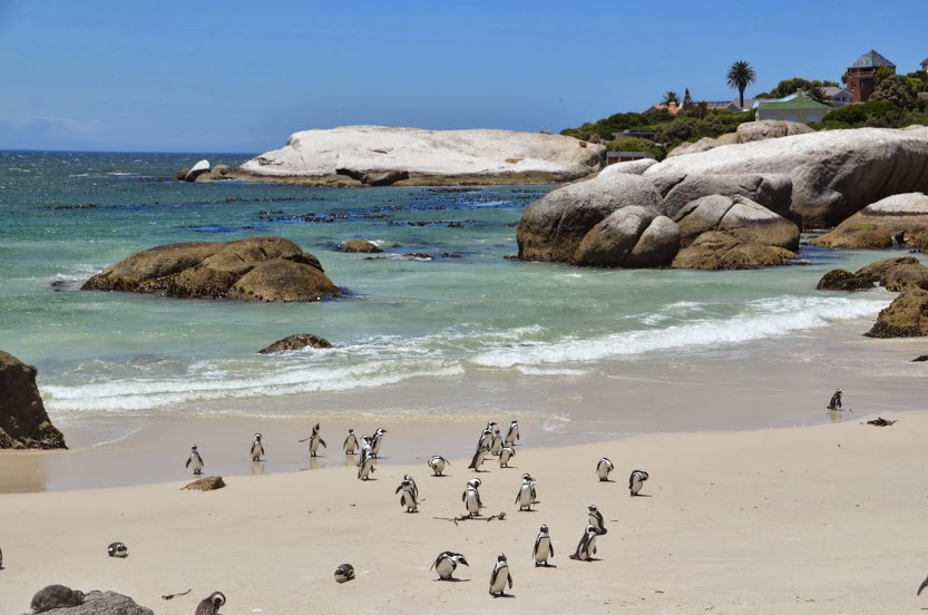 Penguins! on a beach