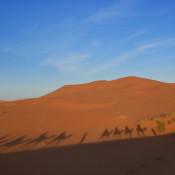 Our modest camel caravan.