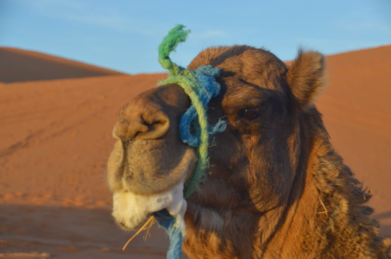 I didn't get any good star photos, so this foaming camel one will suffice.